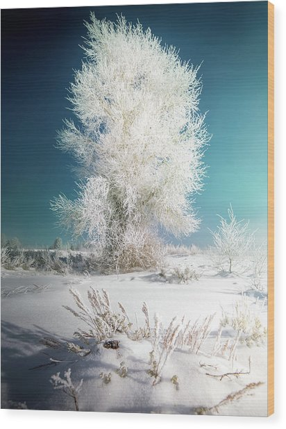 Lone Survivor / Grand Teton National Park  Wood Print