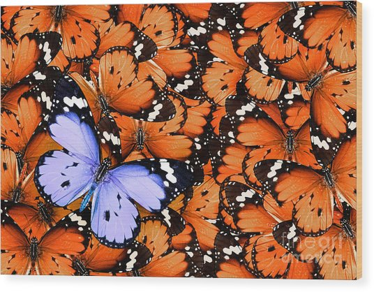 Lonely Lilac Butterfly Among Set Of Wood Print