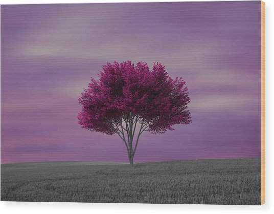 Lonely Tree At Purple Sunset Wood Print