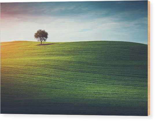 Lonely Tree In Tuscany Wood Print by Borchee