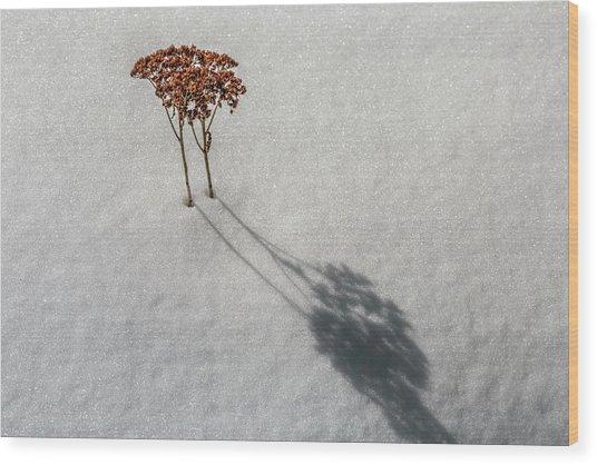 Long Shadow Of Winter Wood Print