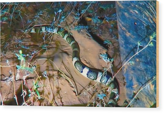Wood Print featuring the photograph Longnosed Snake By A Desert Wash by Judy Kennedy