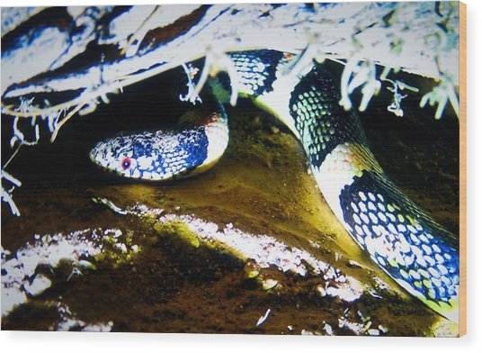 Wood Print featuring the photograph Longnosed Snake In The Desert by Judy Kennedy