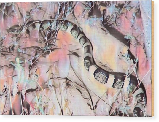 Wood Print featuring the photograph Longnosed Snake - Rhinocheilus Lecontei by Judy Kennedy