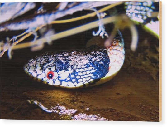 Wood Print featuring the photograph Longnosed Snake Portrait by Judy Kennedy