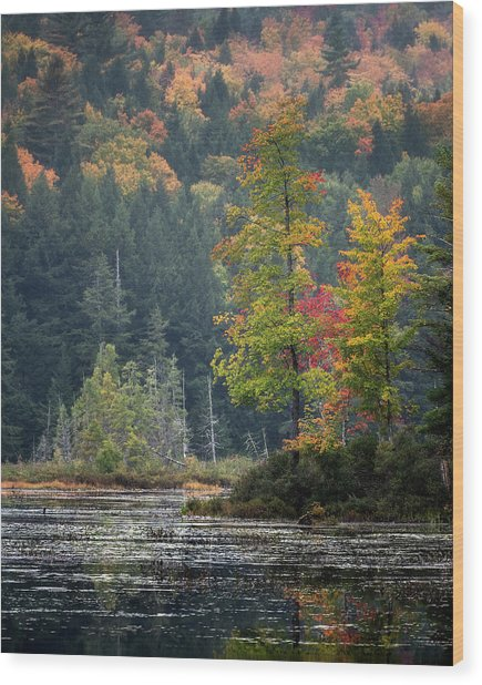 Loon Lake Wood Print