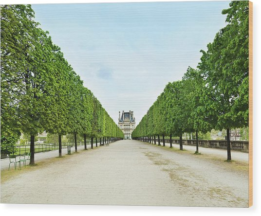 Louvre In  Paris Wood Print by Nikada