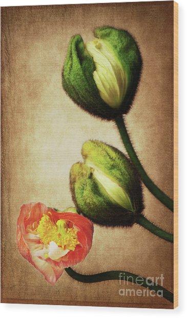 Love Poppies Wood Print