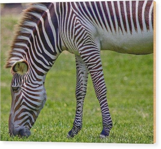 Love Zebras Wood Print