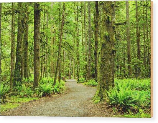 Lush Green Rain Forest Wood Print by Jordan Siemens
