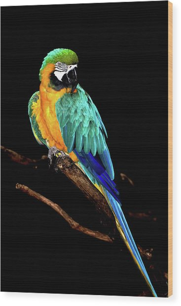 Macaw Wood Print by David Keith Jr. (all Rights Reserved)