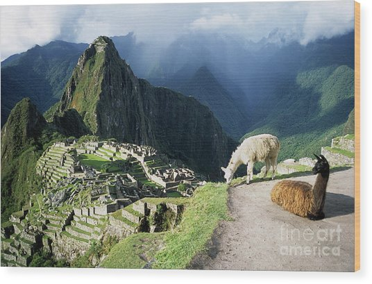 Machu Picchu And Llamas Wood Print