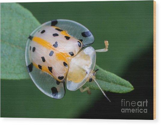 Macro Photography - Transparent Yellow Wood Print