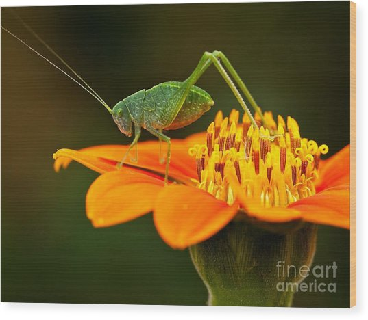 Macro Photos From Insects, Nature And Wood Print by Dudu Linhares