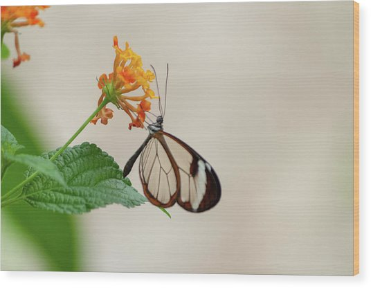 Wood Print featuring the photograph Made Of Glass by Anjo Ten Kate