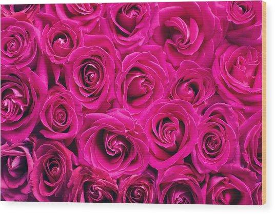 Magenta Roses Wood Print