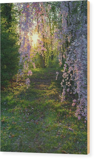 Magnolia Tree Sunset Wood Print