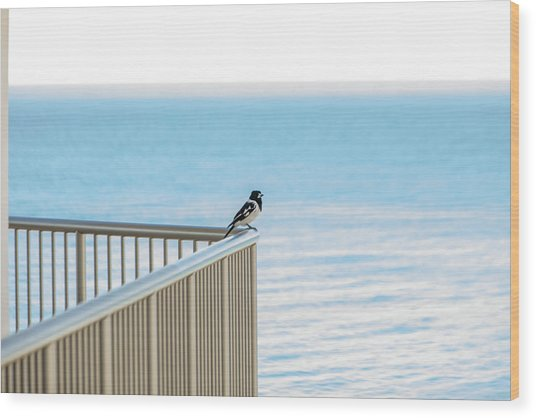 Magpie In Waiting Wood Print