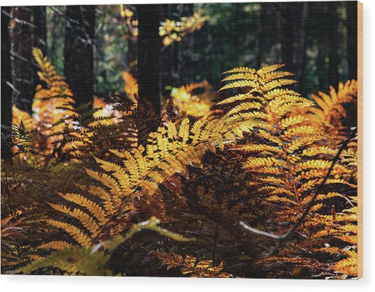 Maine Autumn Ferns Wood Print