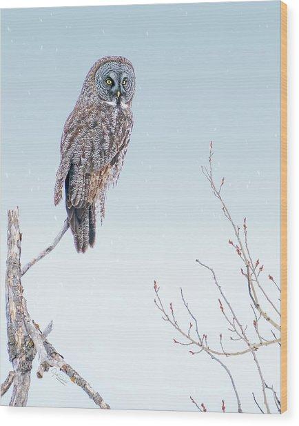 Majestic Great Gray Owl Wood Print