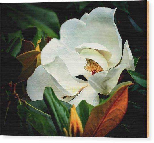 Majestic Magnolia Flower Wood Print