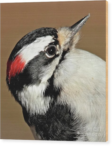 Male Downy Woodpecker Wood Print
