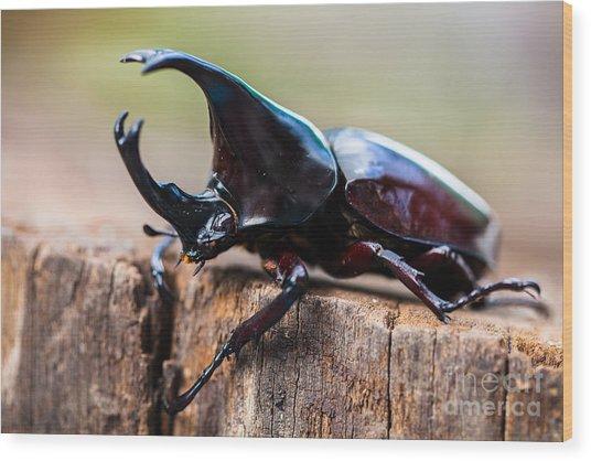 Male Rhinoceros Beetle, Rhino Beetle Wood Print