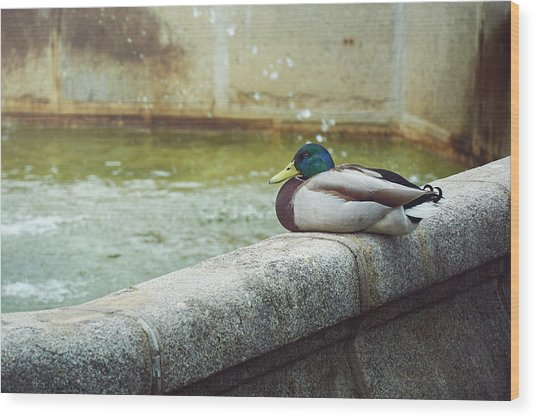 Mallard Resting On The Fountain Of The Fallen Angel In The Retiro Park - Madrid, Spain Wood Print