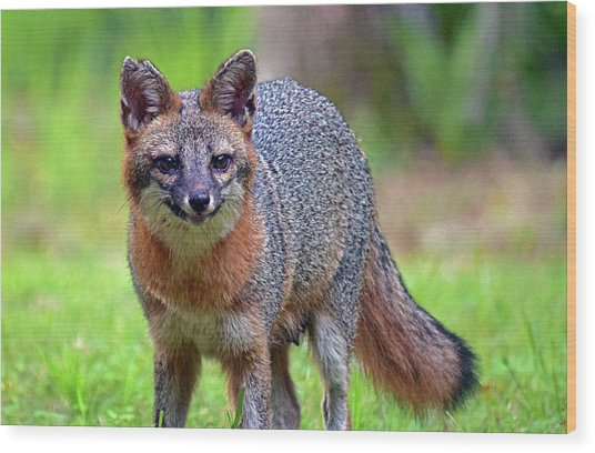 Mama Fox Wood Print