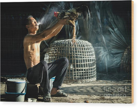 Man Cleaning Thai Gamecock Wood Print