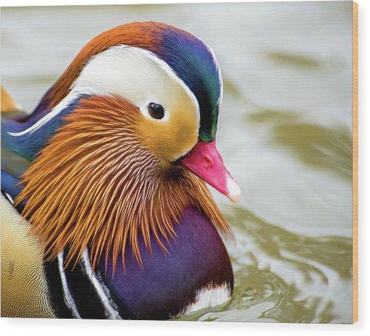 Mandarin Duck Portrait Wood Print