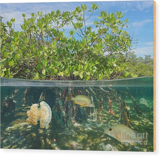 Mangrove Above And Below Water Surface Wood Print