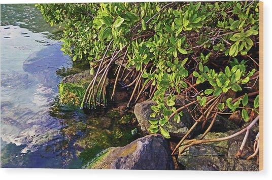 Mangrove Bath Wood Print