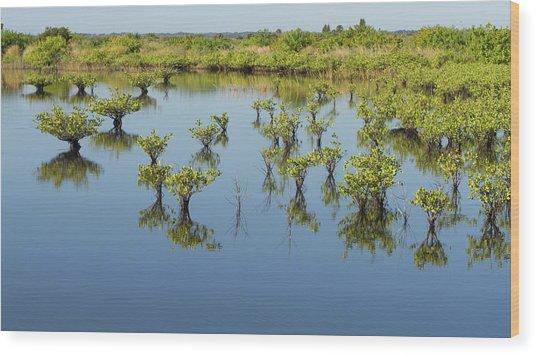 Mangrove Nursery Wood Print