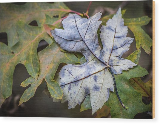 Wood Print featuring the photograph Maple And Oak by Michael Arend