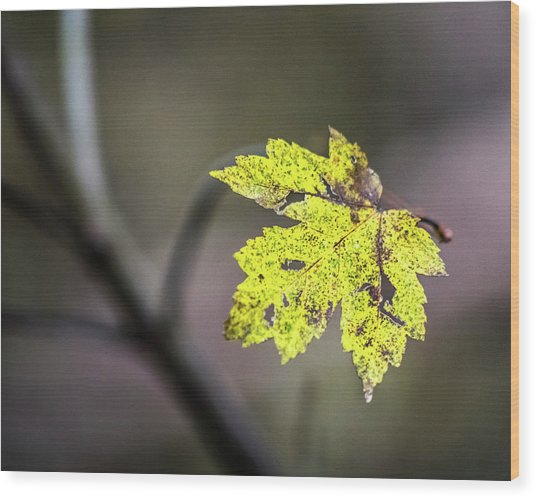 Wood Print featuring the photograph Maple Bright by Michael Arend