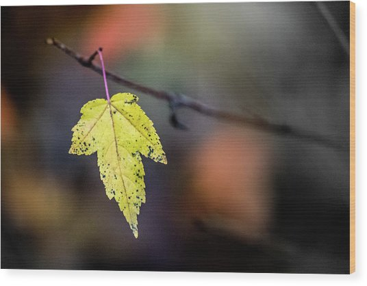 Wood Print featuring the photograph Maple Flag by Michael Arend