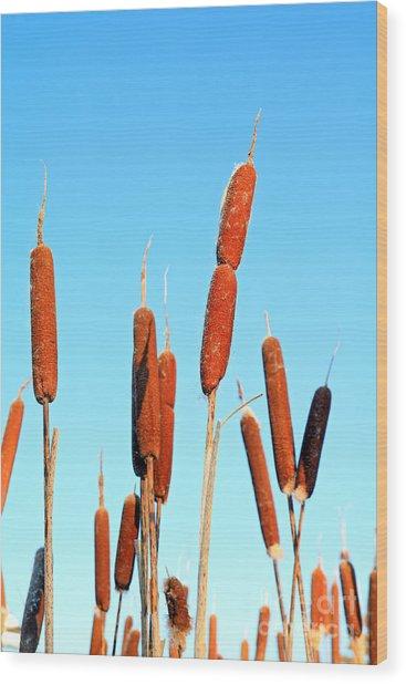 Marsh Bulrush On Celestial Background Wood Print by Basel101658