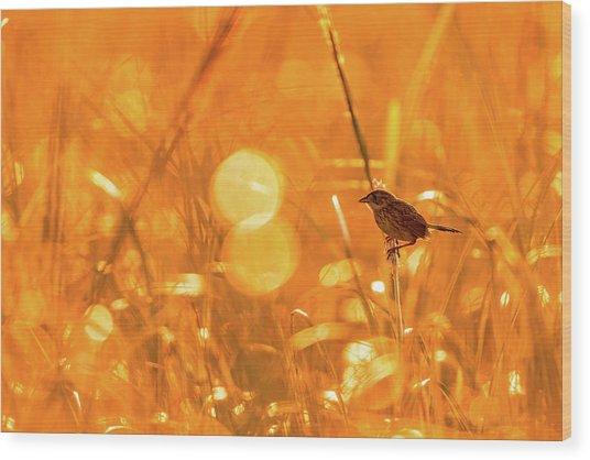 Marsh Sparrow Wood Print