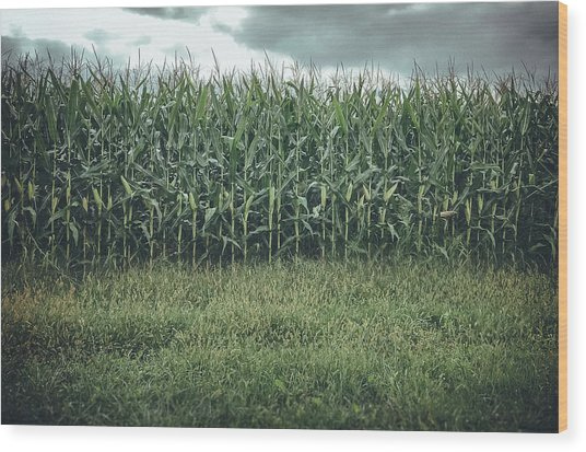 Maize Field Wood Print