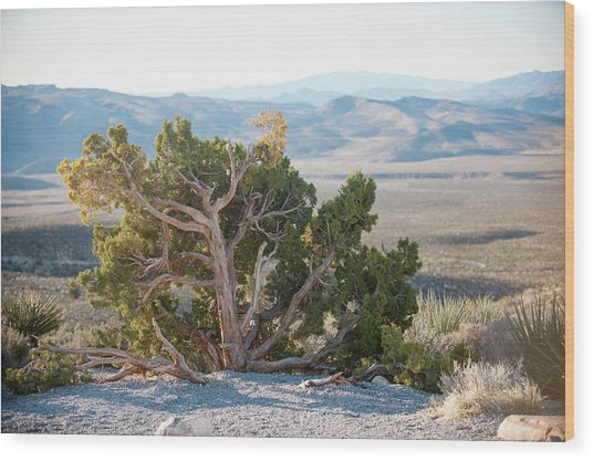 Mesquite In Nevada Desert Wood Print