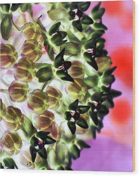 Milkweed 1323 Wood Print