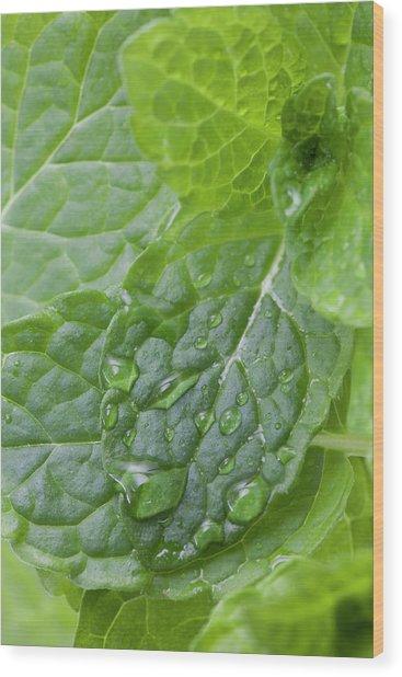 Mint Wood Print by Andrew Dernie
