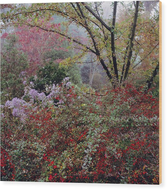 Misty Autumn Scene With Cotoneaster Wood Print