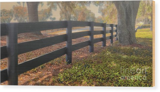 Misty Morning Walk Wood Print