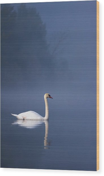 Wood Print featuring the photograph Misty River Swan 2 by Davor Zerjav