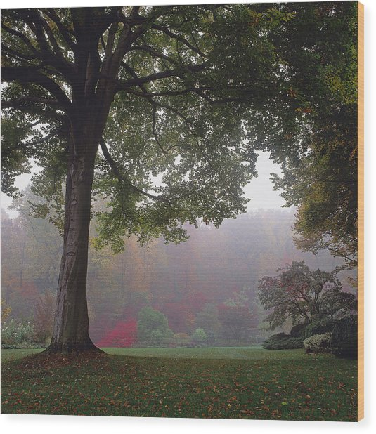 Misty View Of Deciduous Trees Wood Print