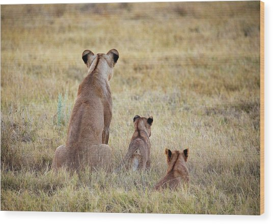 Mom And Cubs Wood Print