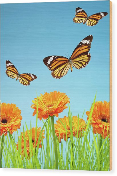 Monarch Butterflies With Grass And Wood Print by Chris Stein