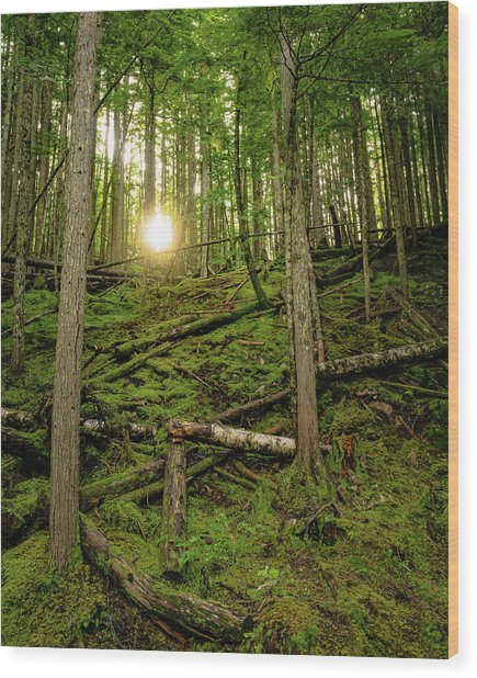 Monashee Forest Portrait Wood Print